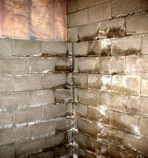 Wet basement wall